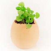 Easter Mini Plants