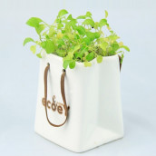 Environmental Planted Gift